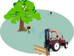 Exclusión en áreas de tala de árboles